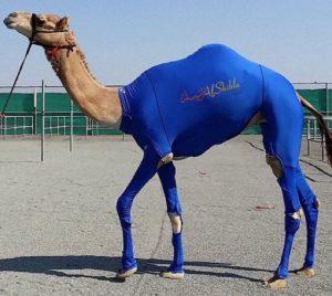 Camelburkini